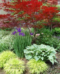 I want one of these trees in my yard! Love the color combinations. I think that the pink is a peony? I really must get some of these purple iris !!
