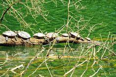Zagreb's Maksimir Park - turtles in the morning meditation