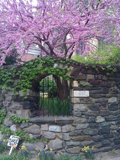 The secret garden at Saint John the Divine, New York (1) From: Out Walking The Dog, please visit