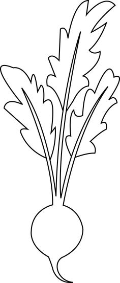 line drawing of beet