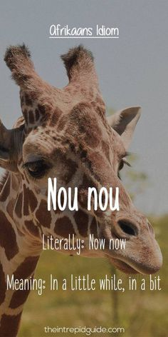 Afrikaans is one one of the easiest languages to learn and make you laugh. Translating Afrikaans to English, these Afrikaans idioms will make you giggle. Unique Words, Cool Words, African Jokes, Afrikaans Language, Afrikaanse Quotes, Biker Quotes, In A Little While, Idioms, Cute Quotes
