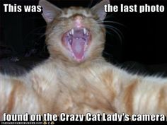 Crazy Crazy Crazy!