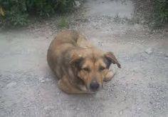 Αποτέλεσμα εικόνας για λευκαδιτη βιβη Dogs, Animals, Animales, Animaux, Pet Dogs, Doggies, Animal, Animais