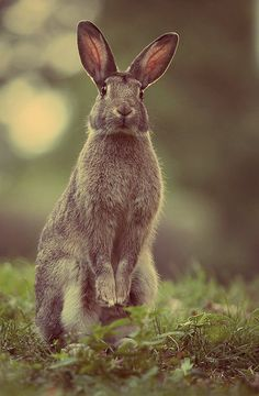 Image result for wild rabbit tumblr
