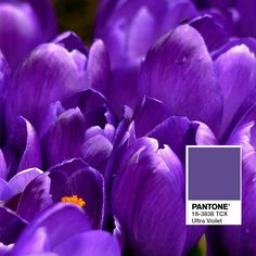 Pantone Color of the Year 2018 Ultra Violet. Perfect with wood floors! 1-877-50Floor.