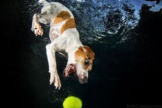 Cachorro pegando bola dentro da agua 4 d7b60f44