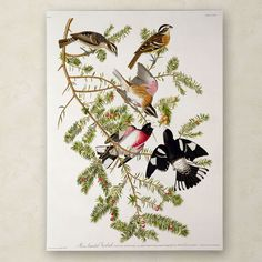 Rose-Breasted Grosbeak by John James Audubon Painting Print on Wrapped Canvas