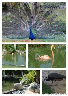 Birds we saw in Punta Cana, Dominican Republic