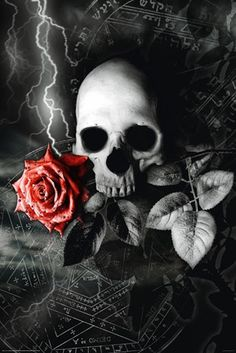Poster DARK - Skull Roses
