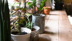 Quer purificar o ar de casa e evitar as toxinas? Conheça 18 plantas para purificar o ar, em pesquisa feita pela NASA.
