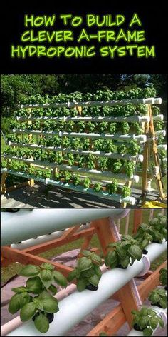 An A-frame hydroponic system lets you grow at least twice the amount of plants from a regular garden bed. This exact structure you see above accommodates 168 plants in just a x space. farming aquaponics system Build an Efficient A-Frame Hydroponic System! Hydroponic Farming, Hydroponic Growing, Aquaponics Diy, Hydroponics System, Aquaponics Greenhouse, Hydroponic Vegetables, Hydroponic Grow Systems, Growing Vegetables, Diy Hydroponik