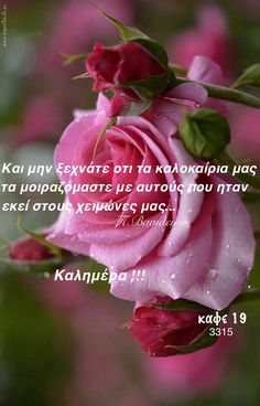 Greek Quotes, Good Morning, Rose, Flowers, Plants, Greece, Buen Dia, Greece Country, Pink