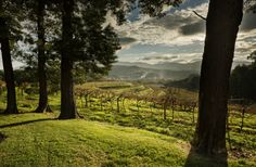 Wine Lover's Guide to Galicia, Spain | Fodor's Travel