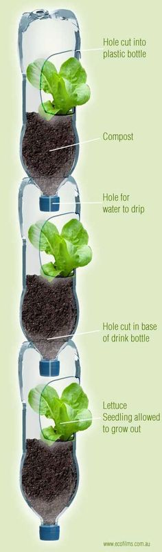 Vertical Plastic Bottle Garden, these are nice to start plants in especially with limited area