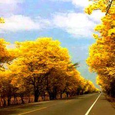 Colombia - carretera Sincelejo - Tolú, todo un espectaculo.