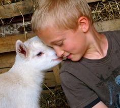 Raising Goats: Breeding and Kidding