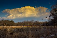 First summer-like clouds of the season, March, 2014 at Pine Island Wildlife Area. - www.devilslakewisconsin.com