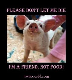 NOT vegan food, happily!