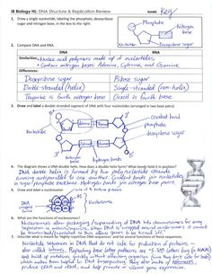 Printables Dna Structure Worksheet other the ojays and texts on pinterest ib dna structure replication review key 2 6 7 1
