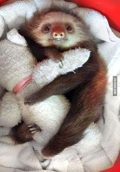 Sloth cuddles