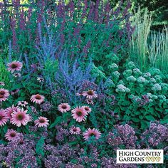 When the rest of your garden is taking a late summer snooze, the August Afternoons perennial garden will wake you up with its engaging display of pinks and blues. By combining a pleasing mixture of grasses, flower forms and colors, this hummingbird and bu Garden Soil, Garden Plants, Outdoor Plants, Perennial Garden Plans, Perennial Gardens, Planting Shrubs, Sun Garden, Potager Garden, Garden Shrubs