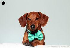 5-Minute No-Sew DIY Dog Bow Tie