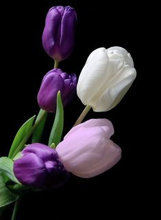 Five tulips. J Hurmerinta photography