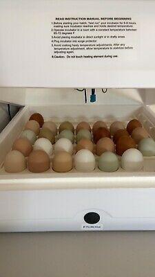 12 Fresh Fertile Chicken Eggs Assorted Barnyard mix
