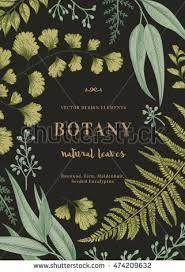 Image result for botanical illustrations on black background
