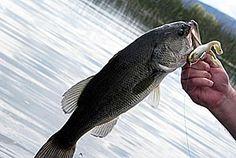 River bass fishing