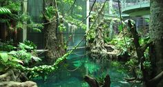 indoor rainforest - Google Search