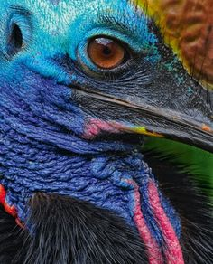 colorful resident of the australian rainforest....