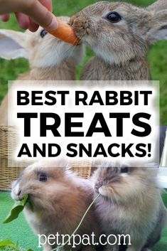 These best bunny treats will have your furry friend hopping to see you! Check out these great rabbit treat ideas - healthy, quick, and easy! Pet Bunny Rabbits, Dwarf Bunnies, Bunny Bunny, Lop Bunnies, Rabbit Toys, Pet Rabbit, What Can Rabbits Eat, Homemade Rabbit Treats, Netherland Dwarf Bunny