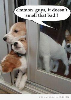 Puppy farts.