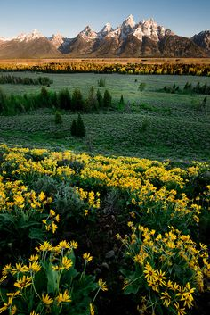 Grand Teton Spring, In Grand Teton National Park, Wyoming, USA.