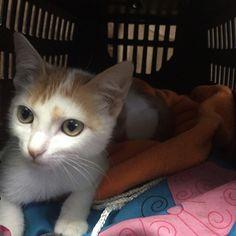 Mi gatito hermoso:)