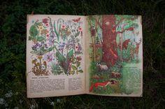 Мы идём в лес. Книги СССР - http://samoe-vazhnoe.blogspot.ru/