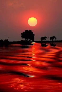 Atardecer con elefantes.