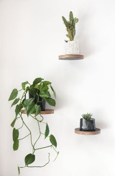 Set of three round floating shelves, $140 from Formantics.