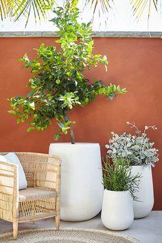 gardens patio Moderno/ARD Gavitella Grey A collaboration between Adam Robinson and Garden Life - Moderno Gavitella pot available in grey and white. Diy Patio, Backyard Patio, Patio Ideas, Patio Greenery Ideas, Porch Ideas, Backyard Ideas, Diy Terrasse, Patio Umbrellas, Garden Pots