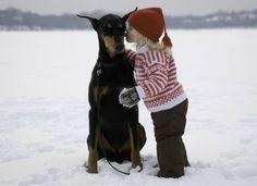 #Doberman getting a winter smooch