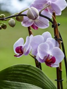Orchid Feeding Tips and Guide