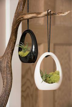 Hanging Terrarium | Air Plant Terrarium | Hanging Air Plant Pendant