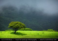 "500px / Photo ""Middle East - Oman - Lonely Tree in Misty Lush Greenness of Salalah Mountains during Khareef Season"" by Lucie Debelkova - Travel Photography - www.luciedebelkova.com"