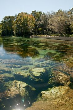Salt Springs Florida | Salt Springs, FL