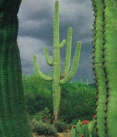 cactus via cubicle refugee