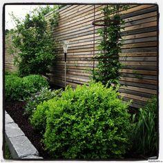Växter, former, staket, gångar etc