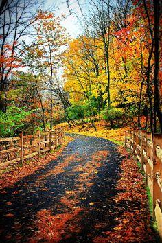 A drive through an autumn landscape