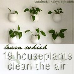 https://www.youtube.com/watch?v=g4pKLg50Oug 19 Houseplants Clean the Air, from sustainablebabysteps.com