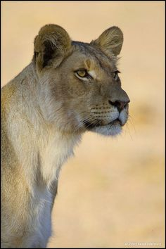 ... im Kgalagadi Transfrontier Park, Süd-Afrika. by Heike Odermatt